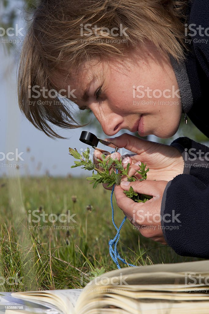 Biologist busy with research. royalty-free stock photo