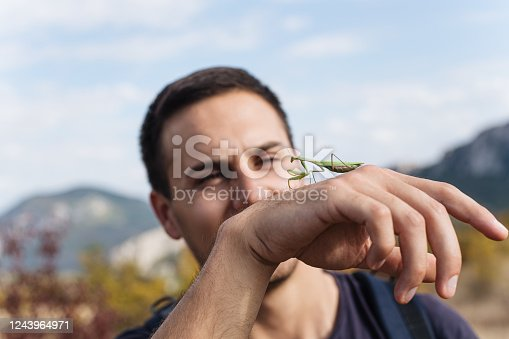 Biologist analyzing and playing with a praying mantis