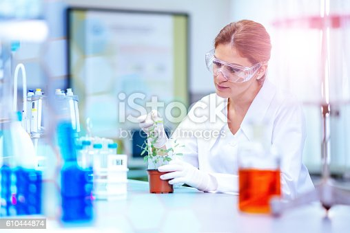627004042istockphoto Biologist examining GMO plant 610444874