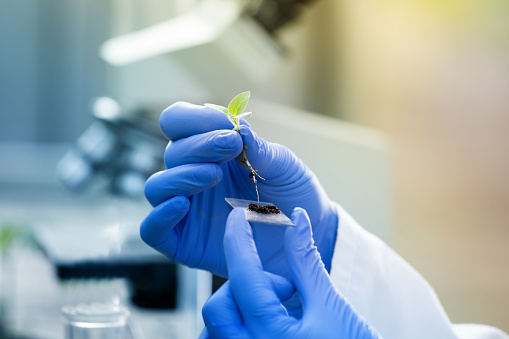 istock Biologist holding seedling above glass for test 951700680