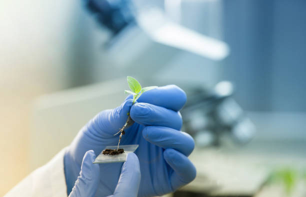 biologist holding seedling in front of microscope - genetic modification stock pictures, royalty-free photos & images