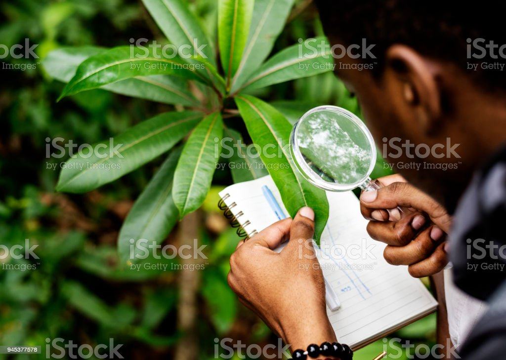 Biologist in a forest alone stock photo