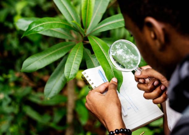 Biólogo en un bosque sola - foto de stock