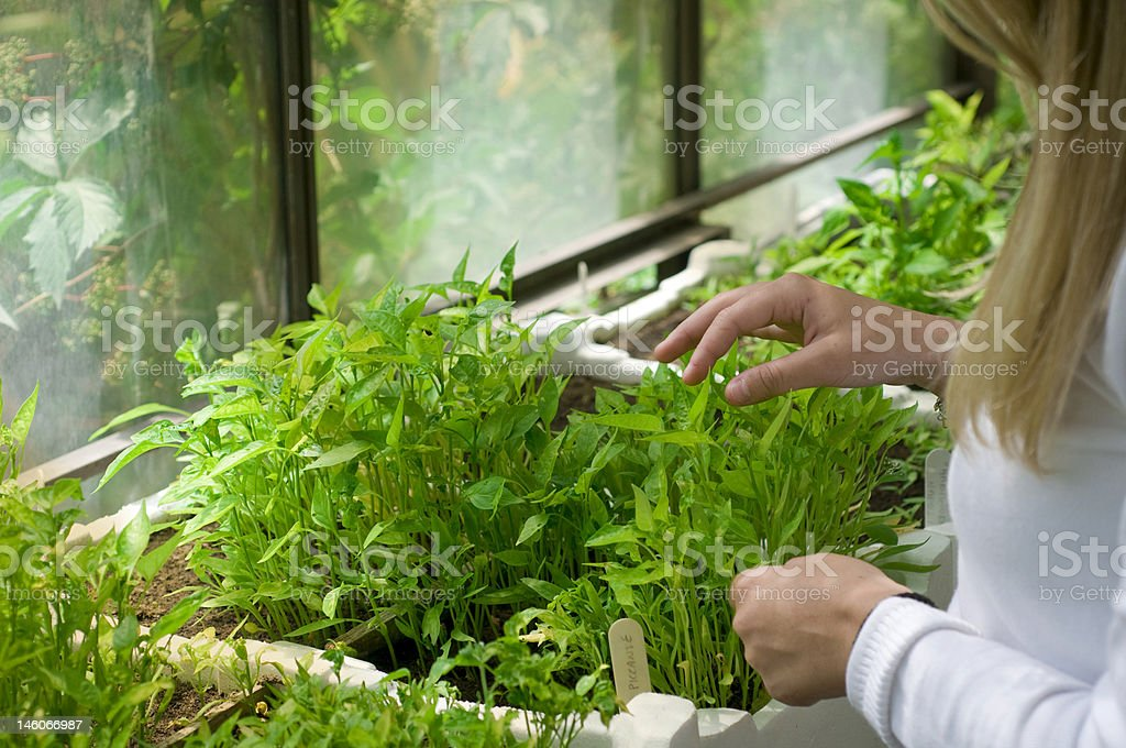biologist in greenhouse royalty-free stock photo