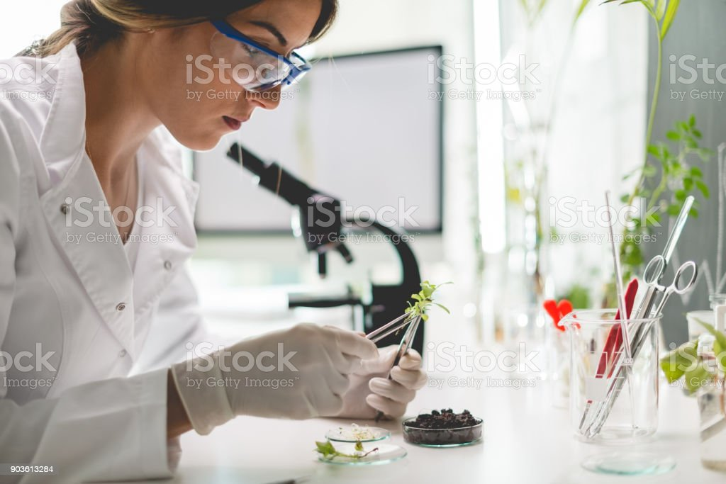 Biologist in laboratory stock photo