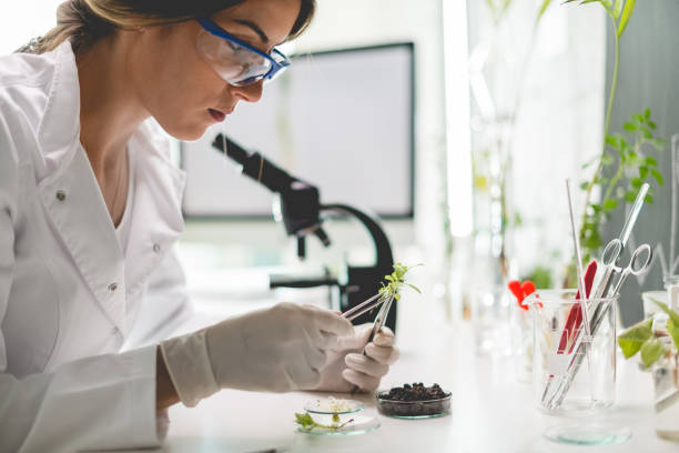 Biologist in laboratory Working in botanical laboratory biochemist stock pictures, royalty-free photos & images
