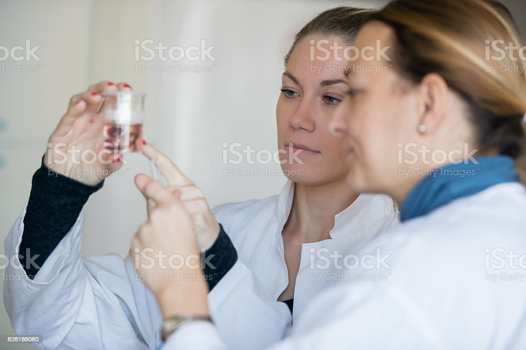 Biologist looking at specimen stock photo