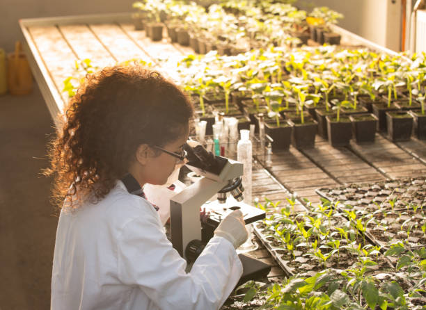 Biologist looking in microscope in greenhouse Young biologist looking at microscope with seedlings around her in greenhouse. Microbiology, biotechnology and bioengineering concept biochemistry stock pictures, royalty-free photos & images