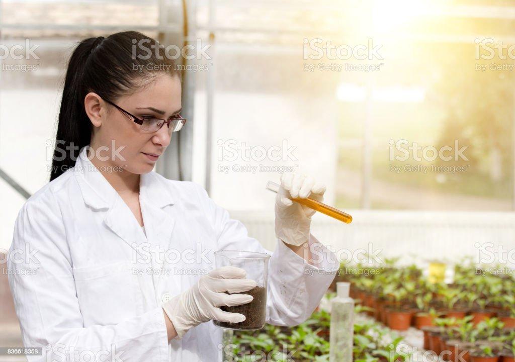 Biologiste, prenant expérience sur sprout - Photo