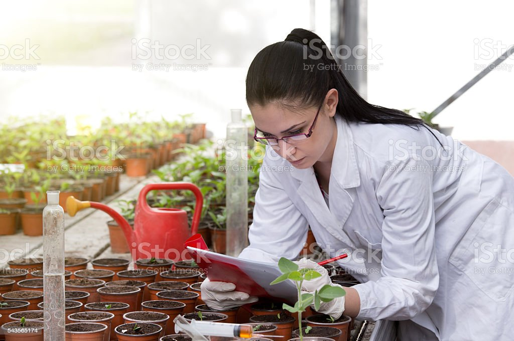 Biologist with sprouts in greenhouse stock photo
