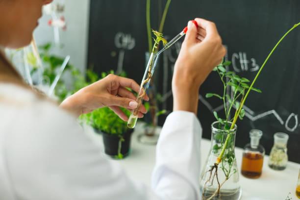 biologist working in laboratory - bio food foto e immagini stock