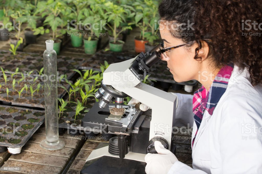 Biologist working with microscope in greenhouse stock photo