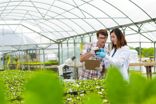istock Biologists working together in a greenhouse 539479180