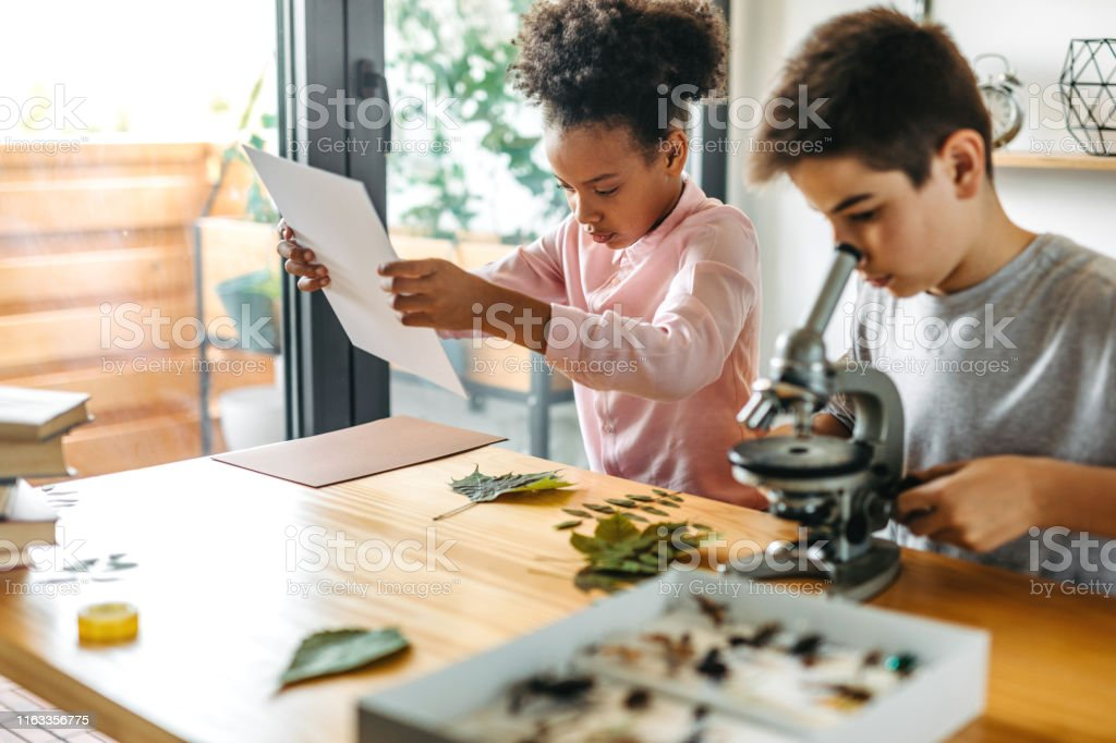 Biology Experiment Primary school students  mixed race and caucasian ethnic using microscope for biology lesson  and making herbarium at home 12-13 Years Stock Photo