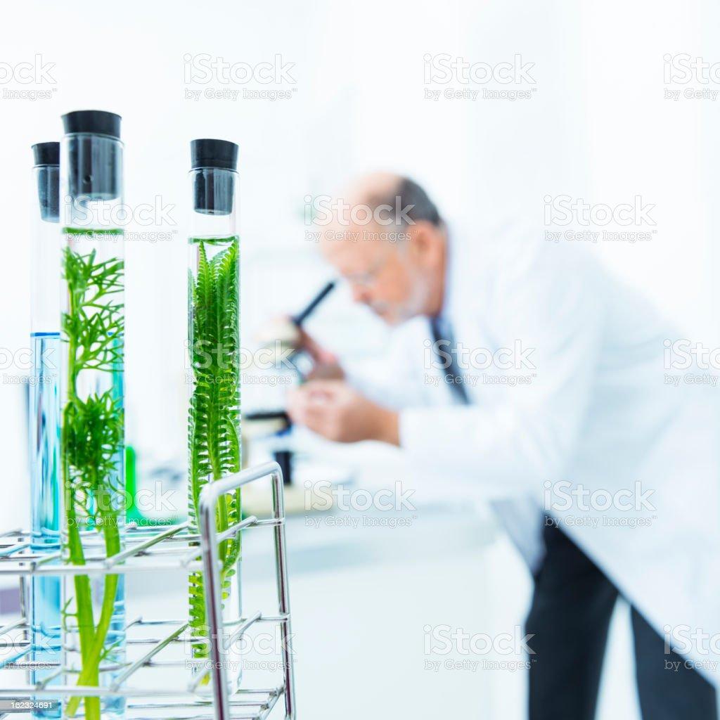 Biologie Untersuchung – Foto
