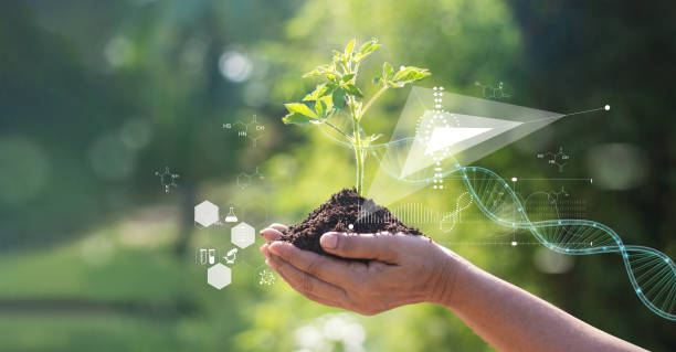Biology laboratory nature and science, Plants with biochemistry structure and chemical formula on green background. stock photo