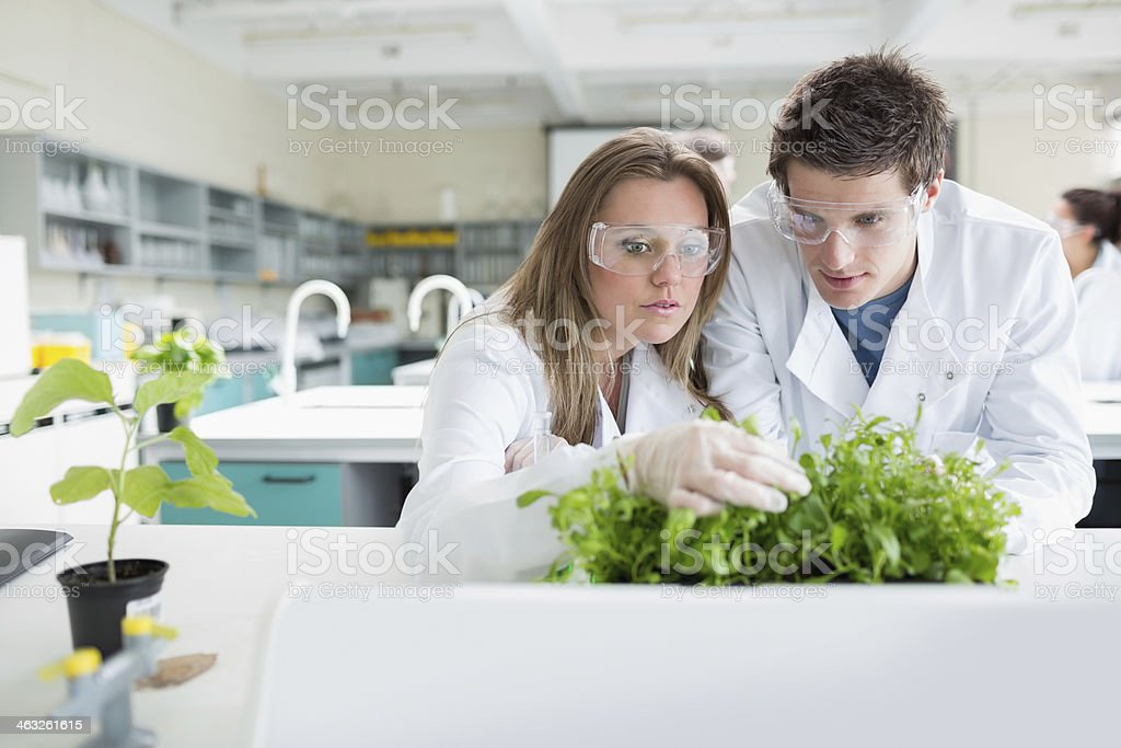 Biology students checking plants in lab stock photo