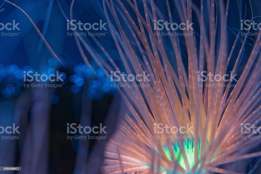 Bioluminescent Anemone stock photo