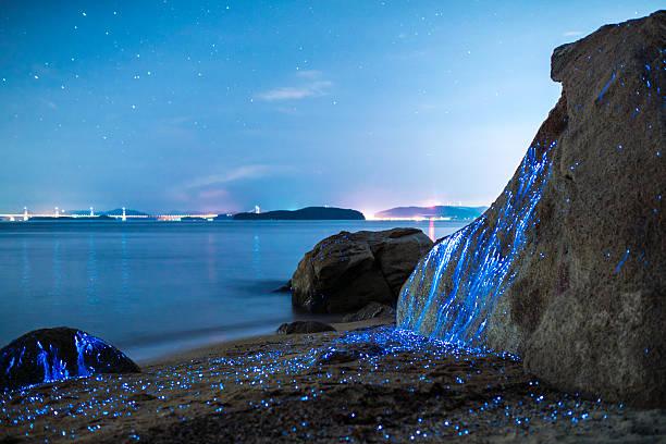 Bioluminescent Sea fireflies stock photo