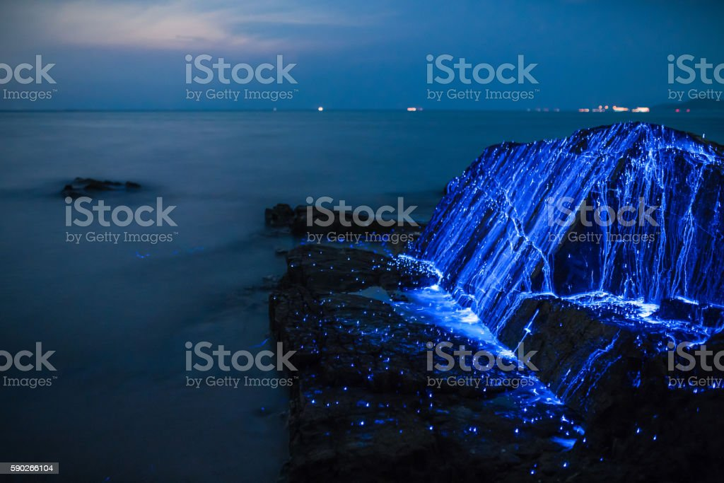 Bio-luminescent shrimp spill over a rock on the coast stock photo