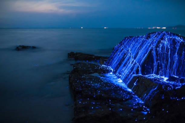 Bio-luminescent shrimp spill over a rock on the coast stock photo