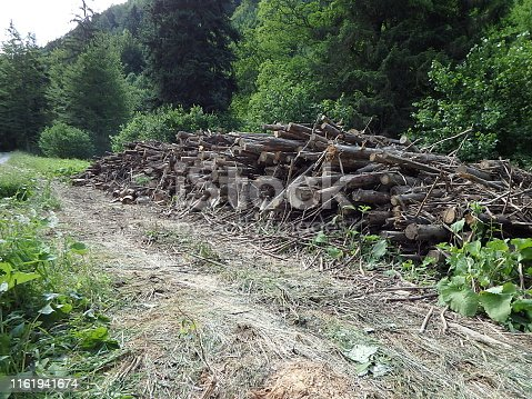 istock Biomass, Cut branches in forest, Branches in the forest, Felled timber stacked up, 1161941674