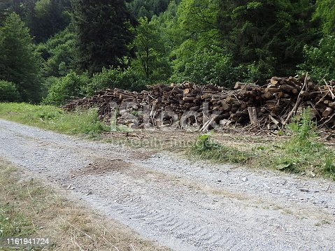 istock Biomass, Cut branches in forest, Branches in the forest, Felled timber stacked up, 1161941724