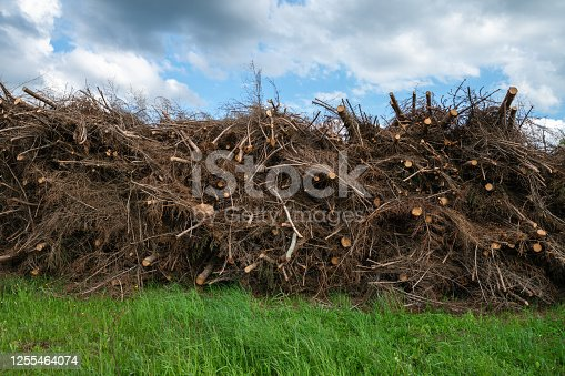 A pile of tree branches used to produce biofuel