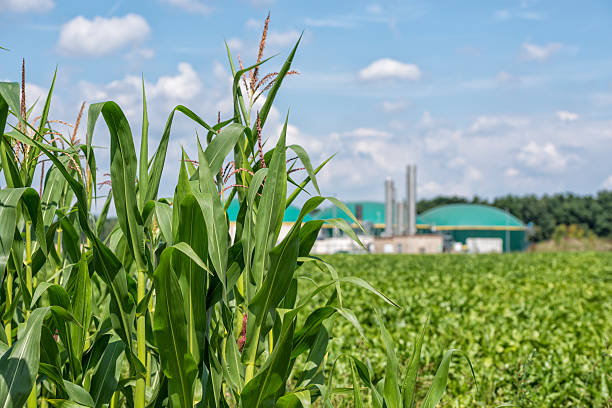 Biomass energy plant behind a cornfield Energiewende Biogas stock photo