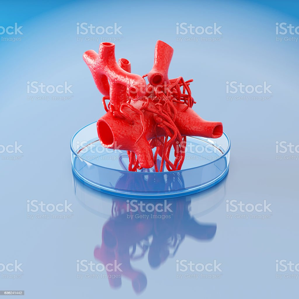 bioprinting of circulatory system - foto de stock