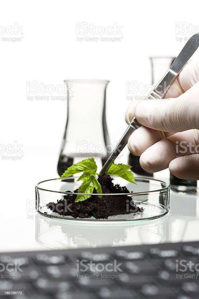 Biosciences royalty-free stock photo