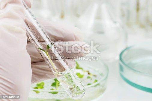 istock Biosciences 536408495