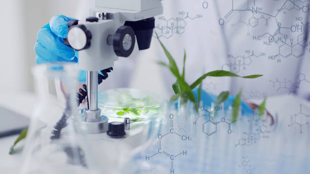 Biotechnology concept. Food tech. Nutritional science. Biotechnology concept. Food tech. Nutritional science. crop plant stock pictures, royalty-free photos & images