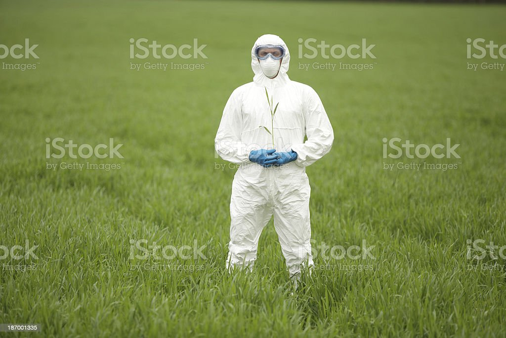 biotechnology engineer on field of genetically modified crops portrait stock photo
