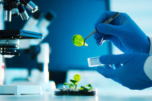 A scientist examining parts of a plant