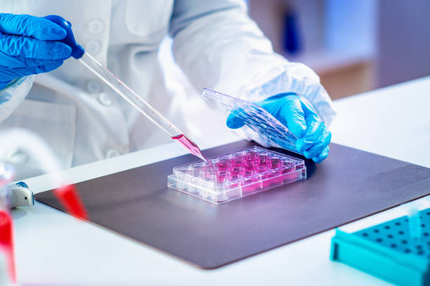 Biotechnology researcher in laboratory Biotechnology. Life science researcher in laboratory stem cell stock pictures, royalty-free photos & images