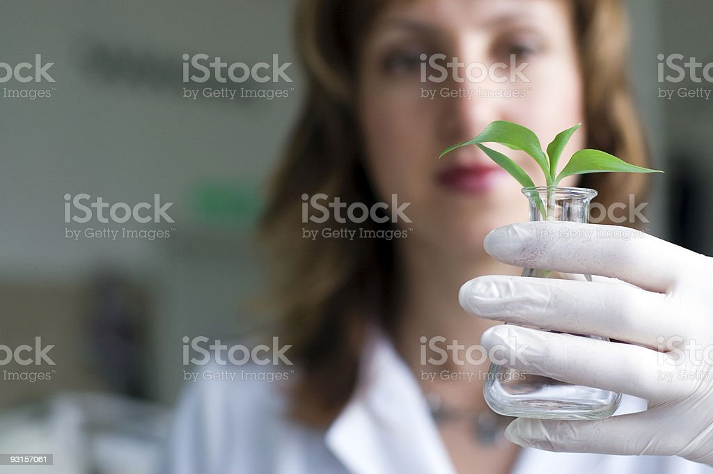 Biotechnology scientist holding an erlenmeyer with a plant stock photo