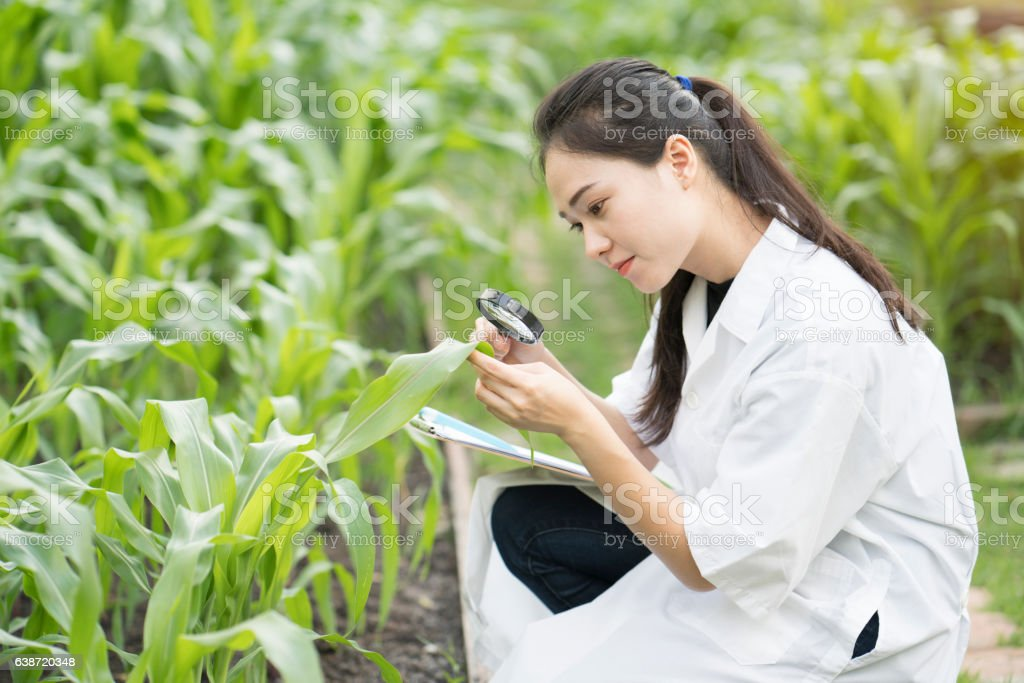 Biotechnology woman engineer examining plant leaf for disease stock photo