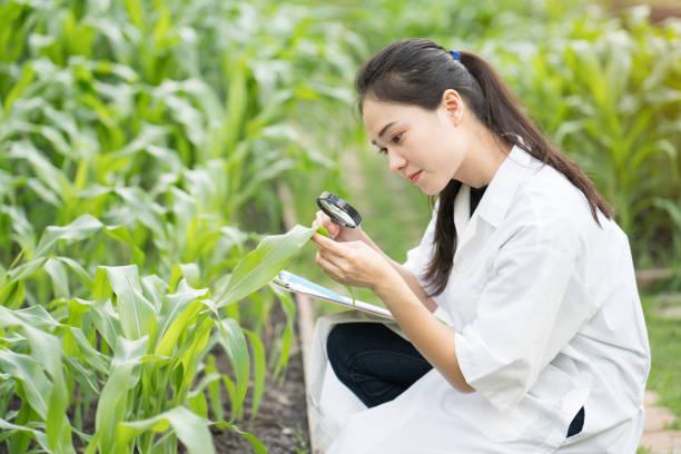 biotechnologie frau ingenieur untersuchen pflanze blatt für disease - bio lebensmittel stock-fotos und bilder