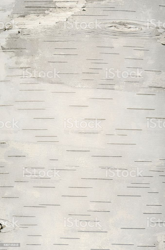 Birch Background stock photo
