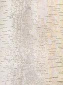 istock Birch bark background 175189805