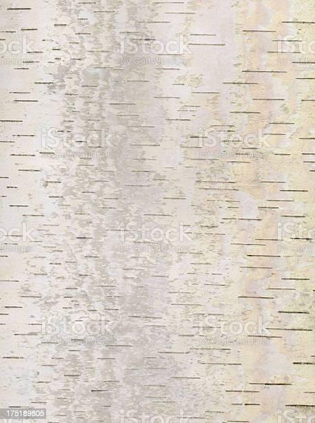 Photo of Birch bark background