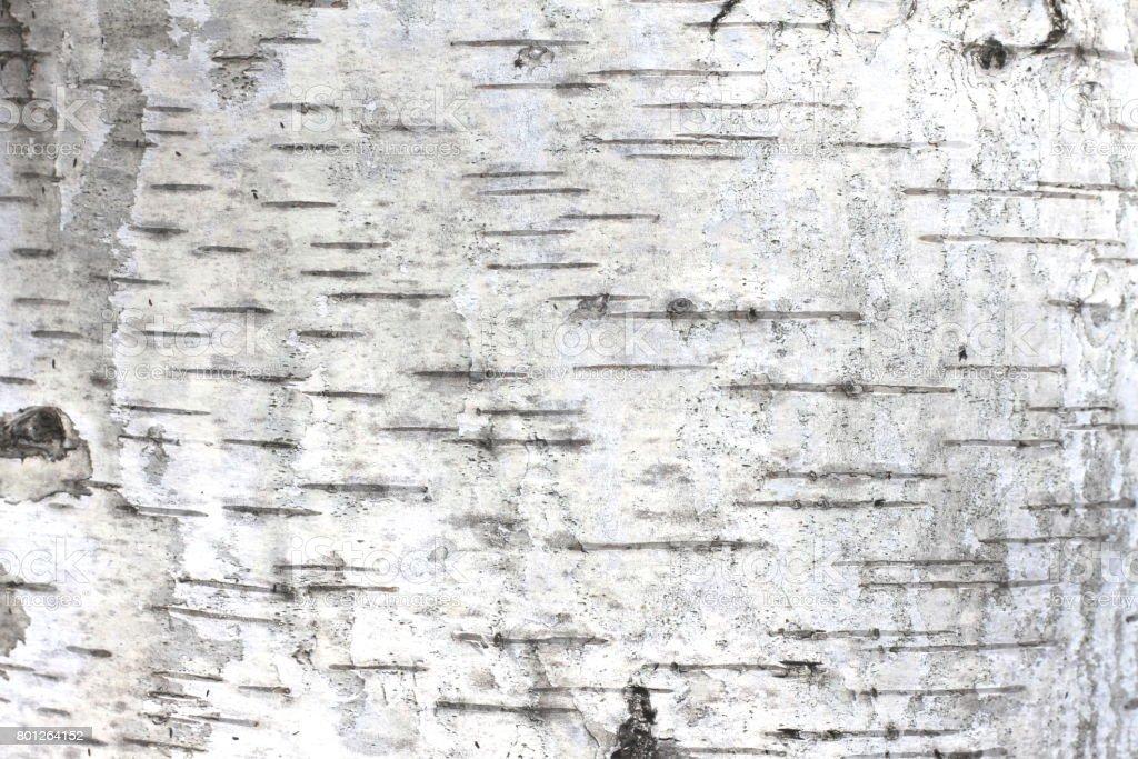 Birke Rinde natürliche Textur Hintergrund – Foto
