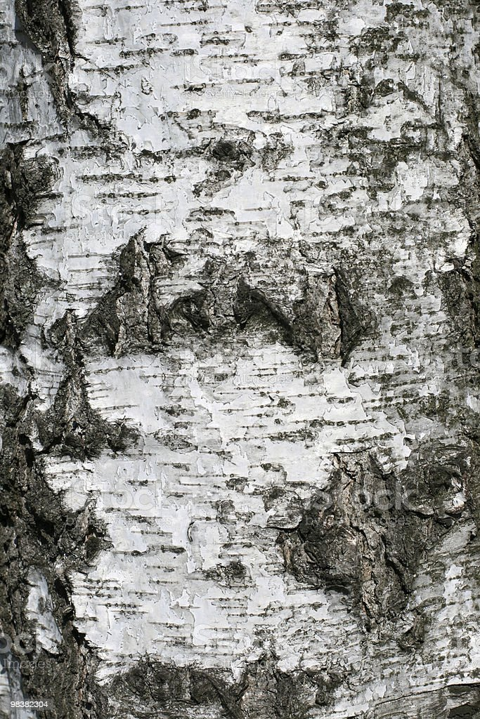 Birch bark royalty-free stock photo
