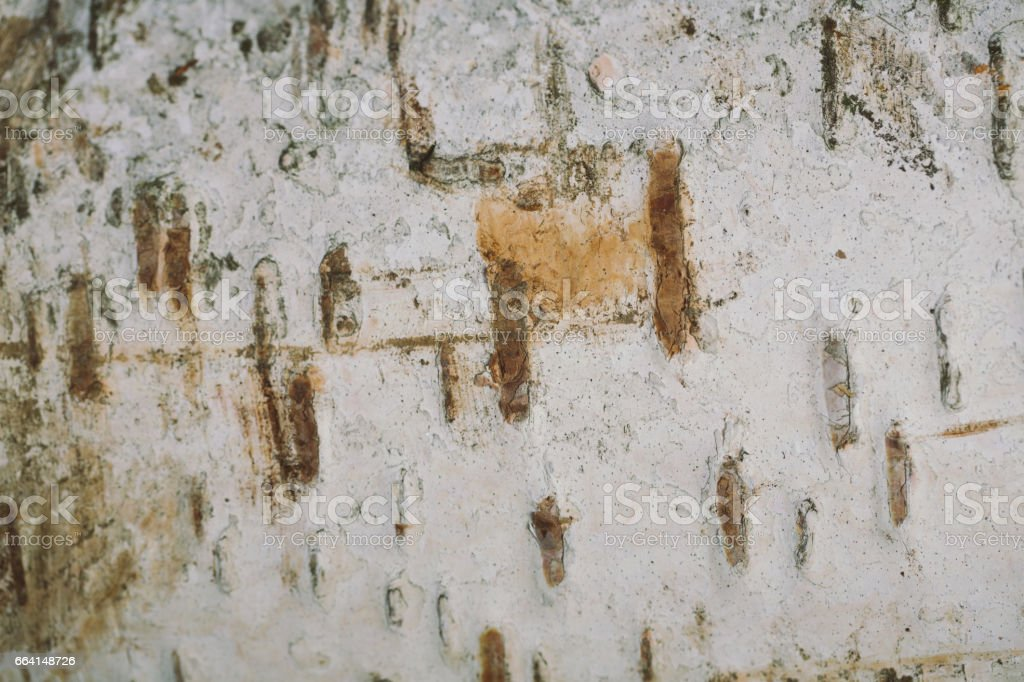 birch bark texture background paper foto stock royalty-free