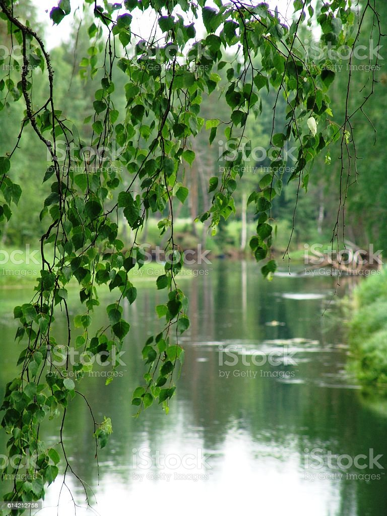 Birch branch against backdrop of river backwaters stock photo