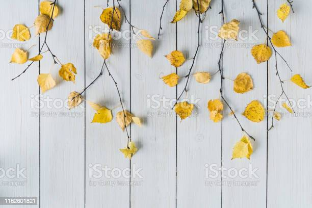 Photo of birch branches with yellow leaves  on white retro wood boards. background. Autumn, fall concept. Flat lay, top view.