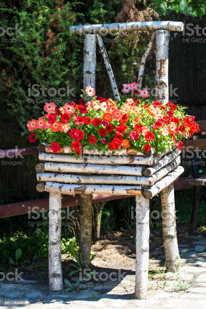 Birch Chair with Petunias stock photo