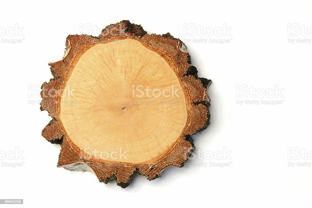 birch crossection royalty-free stock photo