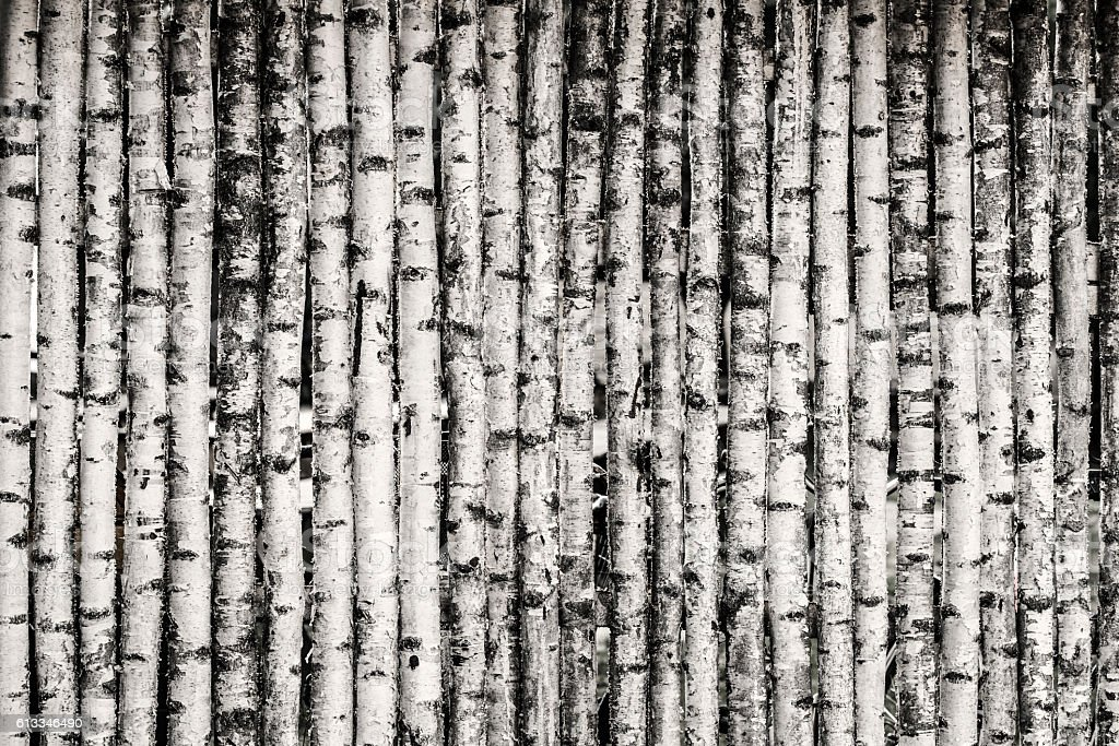 Birch Fence Background stock photo